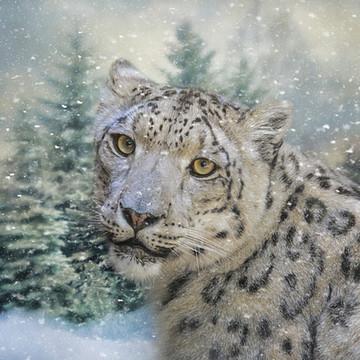 Winter Wildlife Collection