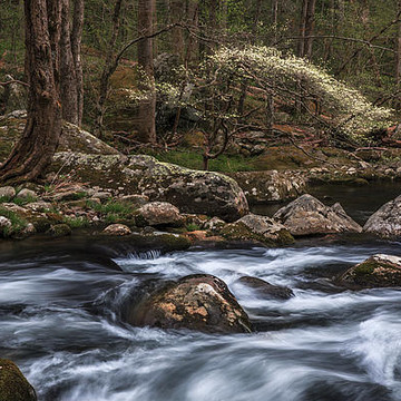 Woodland Waters Collection