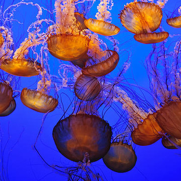 World Of Jellyfish Collection