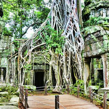 Y Cambodia Collection