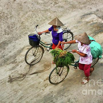 Y Vietnam Collection