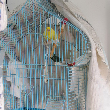 Yellow Bird Collection
