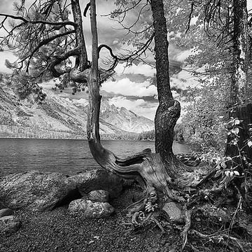 Yellowstone Grand Tetons Collection