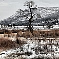 Yellowstone National Park - Lamar Valley Collection