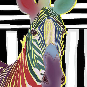 Zebras Collection