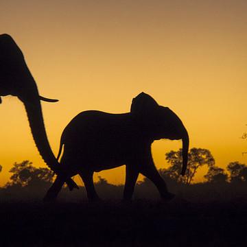 Zimbabwe Africa Collection