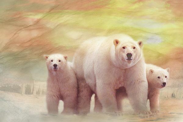 Trudi Simmonds -  Arctic Summer