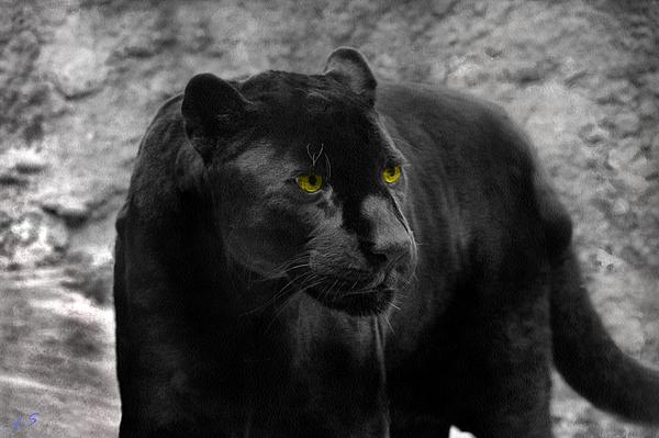 Sergey Lukashin -  Black leopard