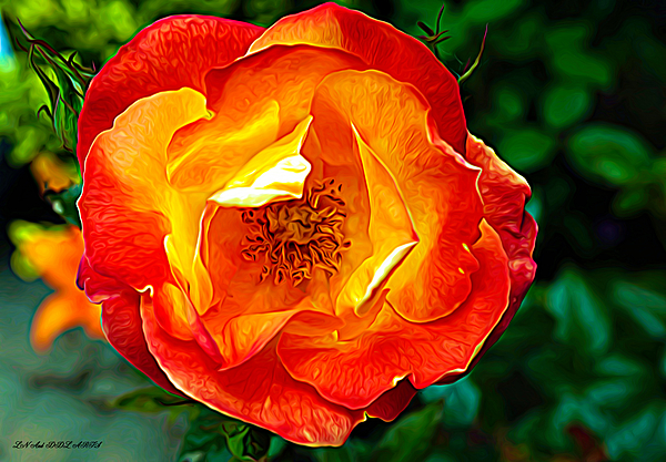 Debra Lynch - A Rose By Any Other Name