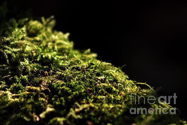 Svetlana Svetlanistaya - Abstract green