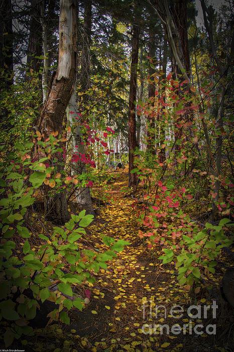Mitch Shindelbower - Autumn Path