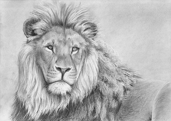 Lion portrait greeting card for sale by nolan clark - Lion a dessiner ...