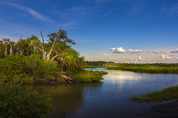Marvin Spates - Protected Wetland