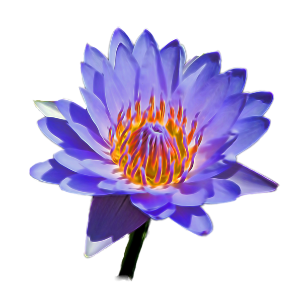 Water Lily Shower Curtain For Sale By Pamela Walton