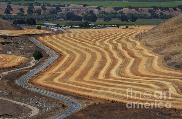 Mitch Shindelbower - Wheat Field