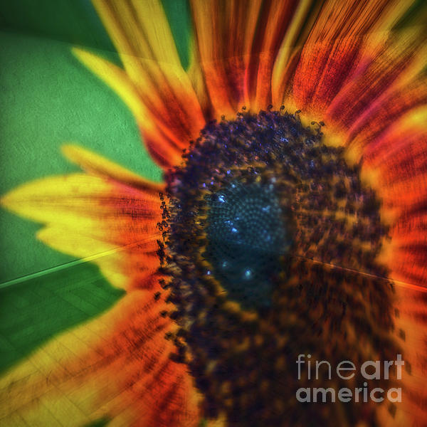 Colin Hunt - 11269 Sunflower Abstract