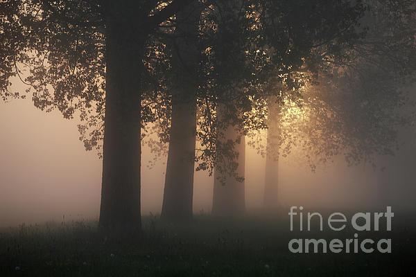 Jana Behr - Misty Morning