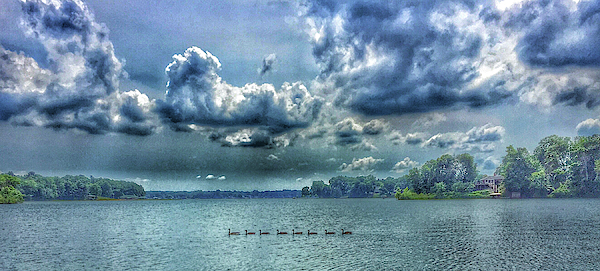 Mary McGrath - Geese on Lake