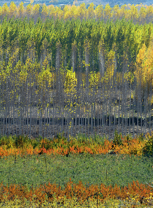 Guido Montanes Castillo - Autumn colors