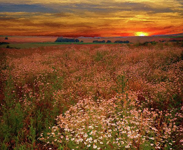 Alex Lim - Summer Sunset