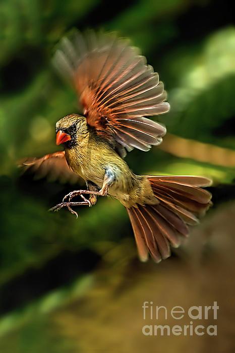 Kay Brewer - A Cardinal Approaches