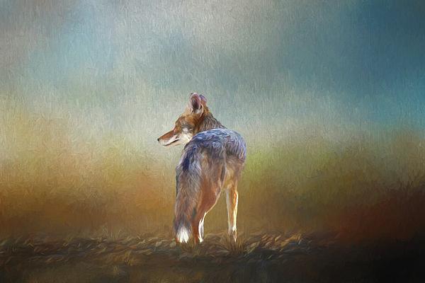 Linda Brody - A Lone Coyote