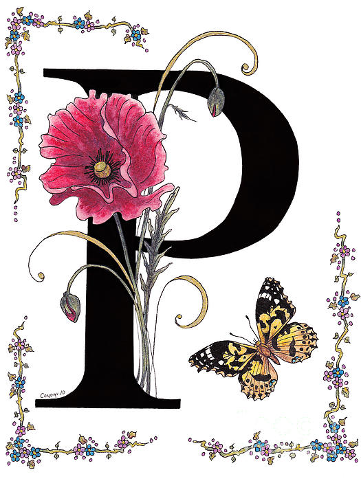 Stanza Widen - A Pink Poppy and a Painted Lady Butterfly