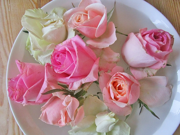 Rosita Larsson - A plate of Roses