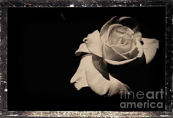 Scott D Van Osdol - A Rose Is But A Rose