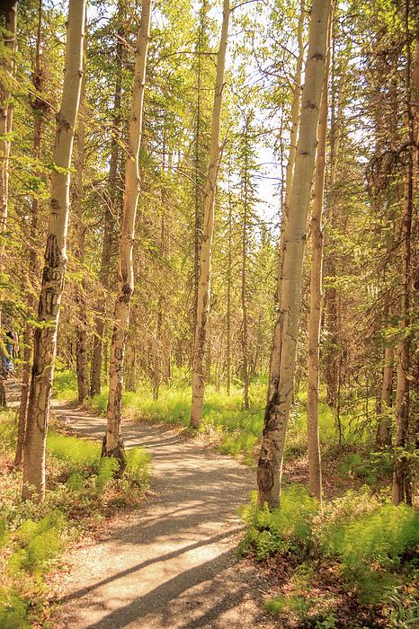 Joni Eskridge - A Sunny Day Hiking in Denali