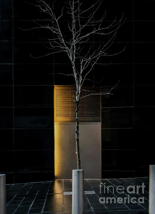 James Aiken - A Tree Grows in the City