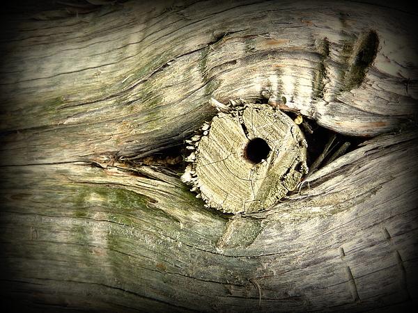 Cindy Wright - A Wooden Eye