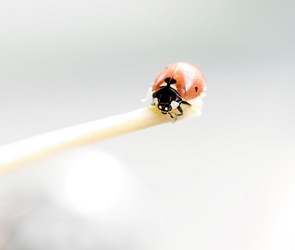 Irina Safonova - Adorable Little Lady-bug