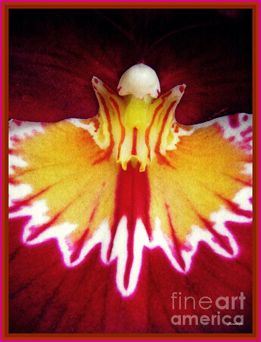 Sarah Loft - Red Pansy Orchid Abstract