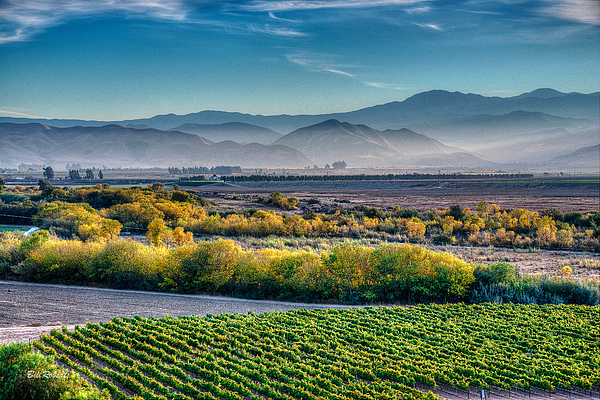 Bill Roberts - Afternoon Light In the Salinas Valley