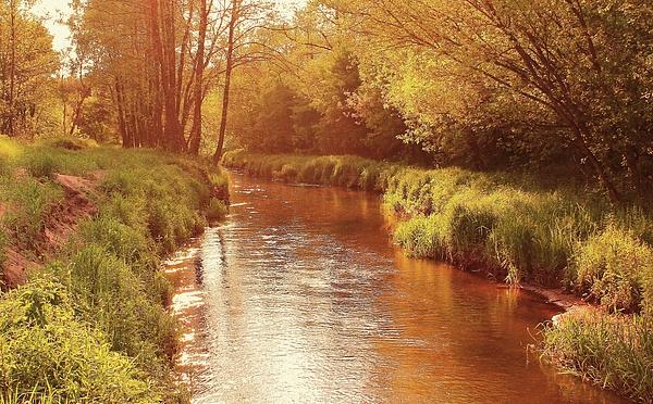Slawek Aniol - Sunny Afternoon