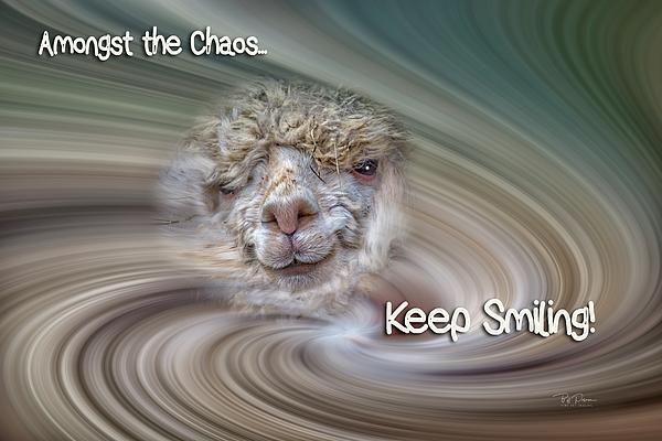 Bill Posner - Alpaca Smile