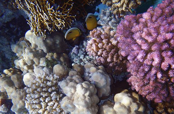 Johanna Hurmerinta - Amazing Red Sea World