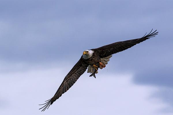 Susan Rissi Tregoning - American Eagle
