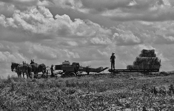 Tricia Marchlik - Amish Farming