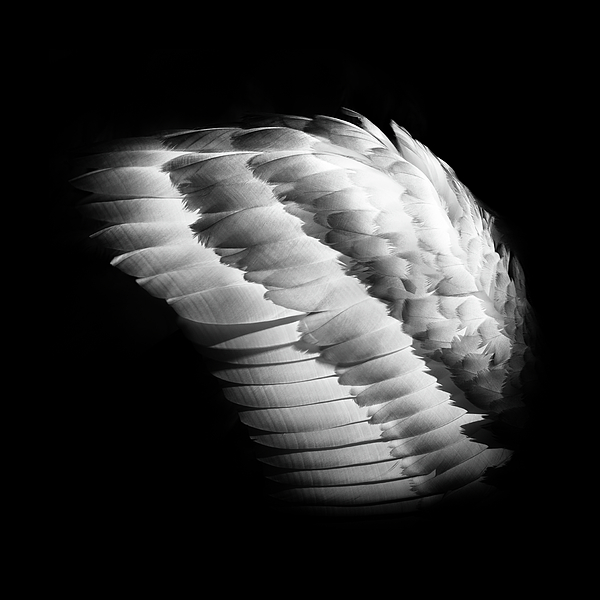Michael Niessen - Angel wing