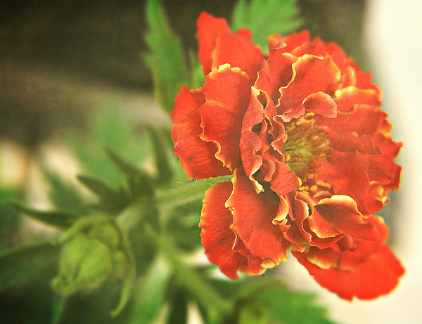 CJ Anderson - Another Geum