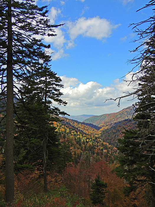 Marian Bell - Another Smoky Mountain View