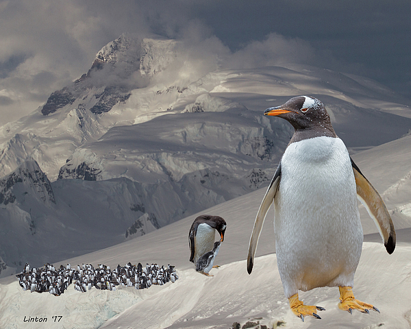 Larry Linton - Antarctic Magesty
