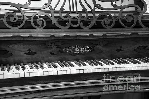 Sharon McConnell - Antique Piano Black And White