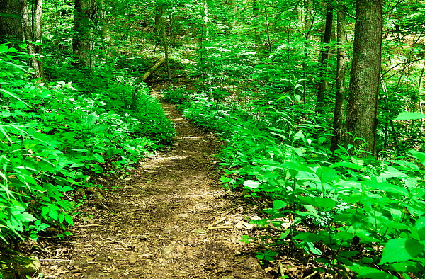 Lisa Bell - Appalachian Trail