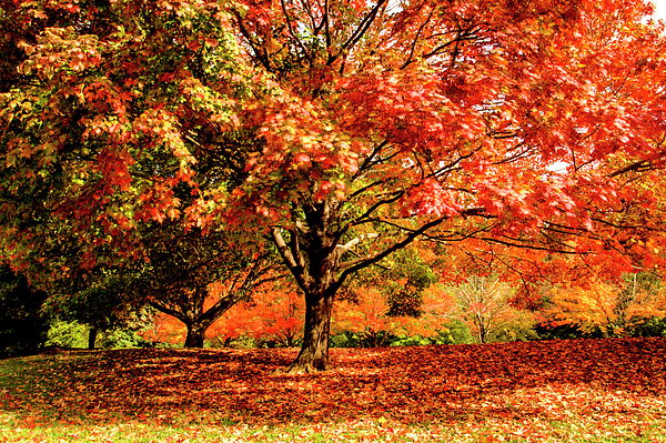 Geraldine Scull - Autumn foliage at Holmdel, in Park New Jersey