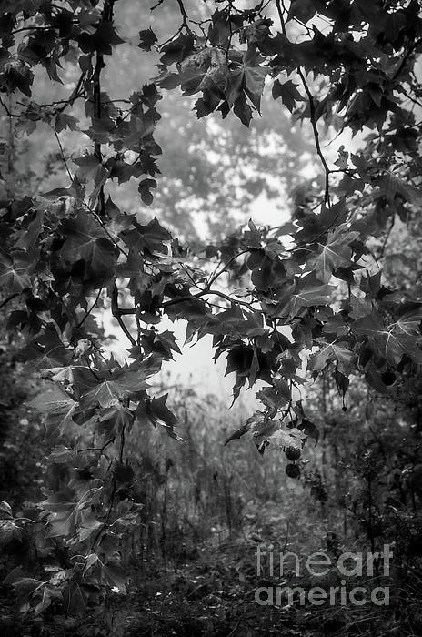 Robert Brown - Autumn in Black and White