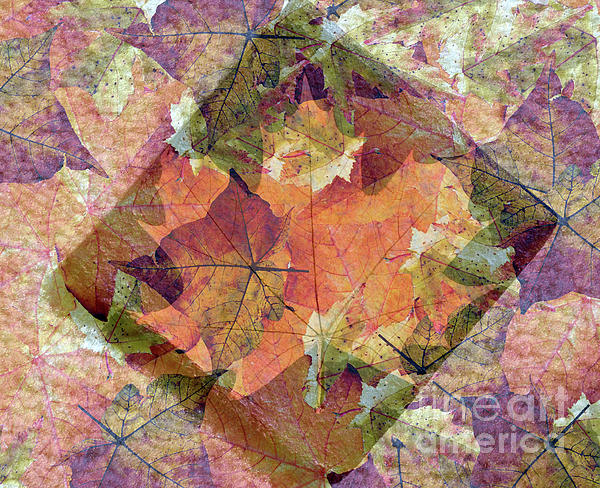 Lydia Holly - Autumn Leaves Impressions