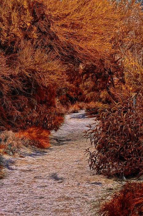 Autumn Stroll No23 Photograph